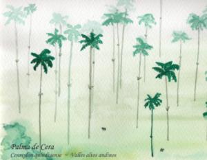 W@Palma de Cera_Ceroxylon quindiuense